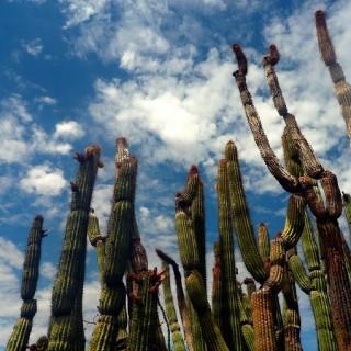A Summer of Sunshine in Tucson, Arizona