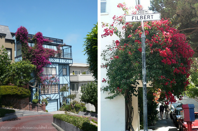 Flowers on Lombard Street, San Francisco