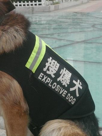 police-dog-tianjin