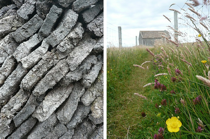 Peatstack and wildflowers in Ness, Isle of Lewis