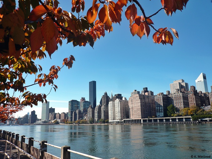 Autumn leaves, Roosevelt Island