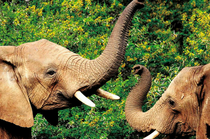 Elephants in Shimba Hills