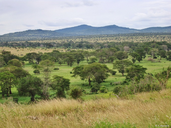 Landscape of Tsavo West