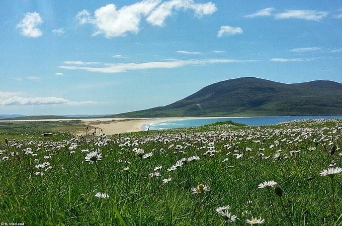Machair in bloom, Scarista, Isle of Harris