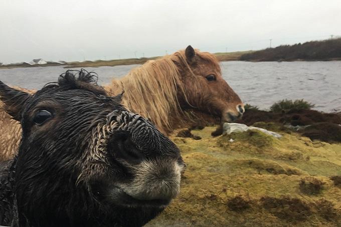 Loch Skipport ponies South Uist