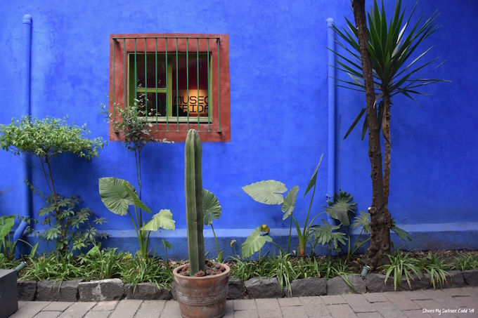 Blue wall and cactus Mexico City