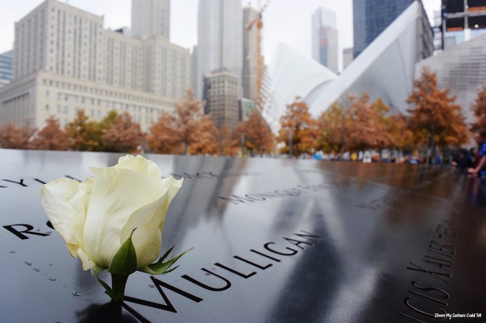 Ground Zero rose