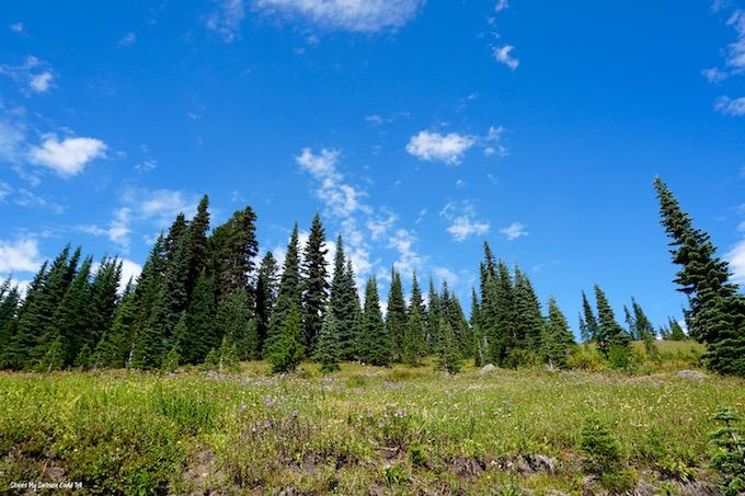 Wildflower meadow Mount Rainier